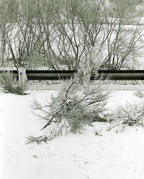 http://conorwootenphoto.com/files/gimgs/34_snowbushedit.jpg