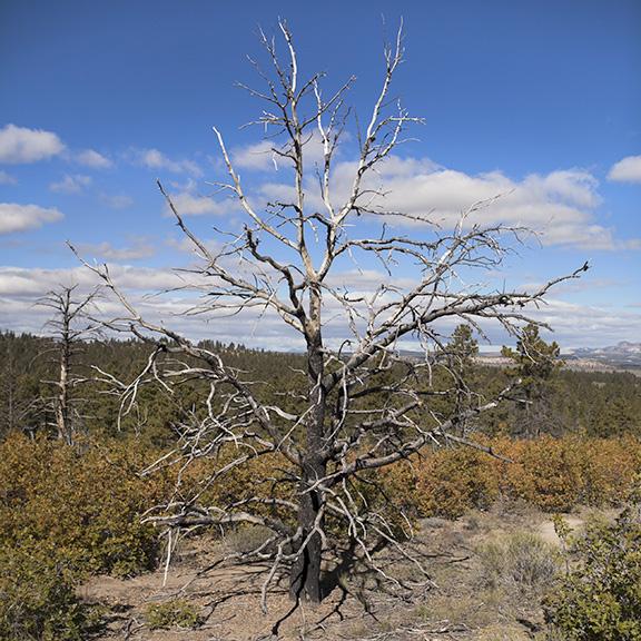 http://conorwootenphoto.com/files/gimgs/34_tree.jpg