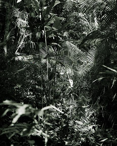 http://conorwootenphoto.com/files/gimgs/35_portdouglasforest.jpg